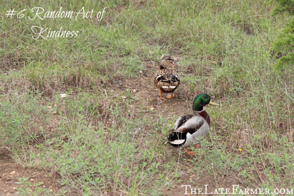 #6 Random Act of Kindness - TheLateFarmer.com .