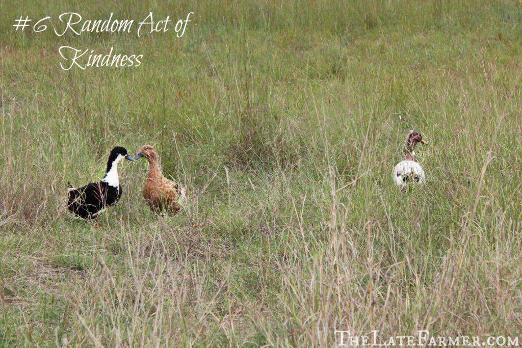 #6 Random Act of Kindness - TheLateFarmer.com